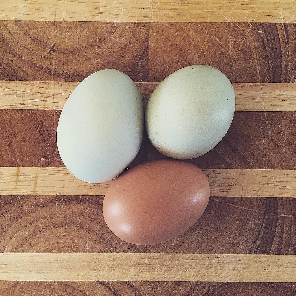 L'œuf, il en a sous la coquille !