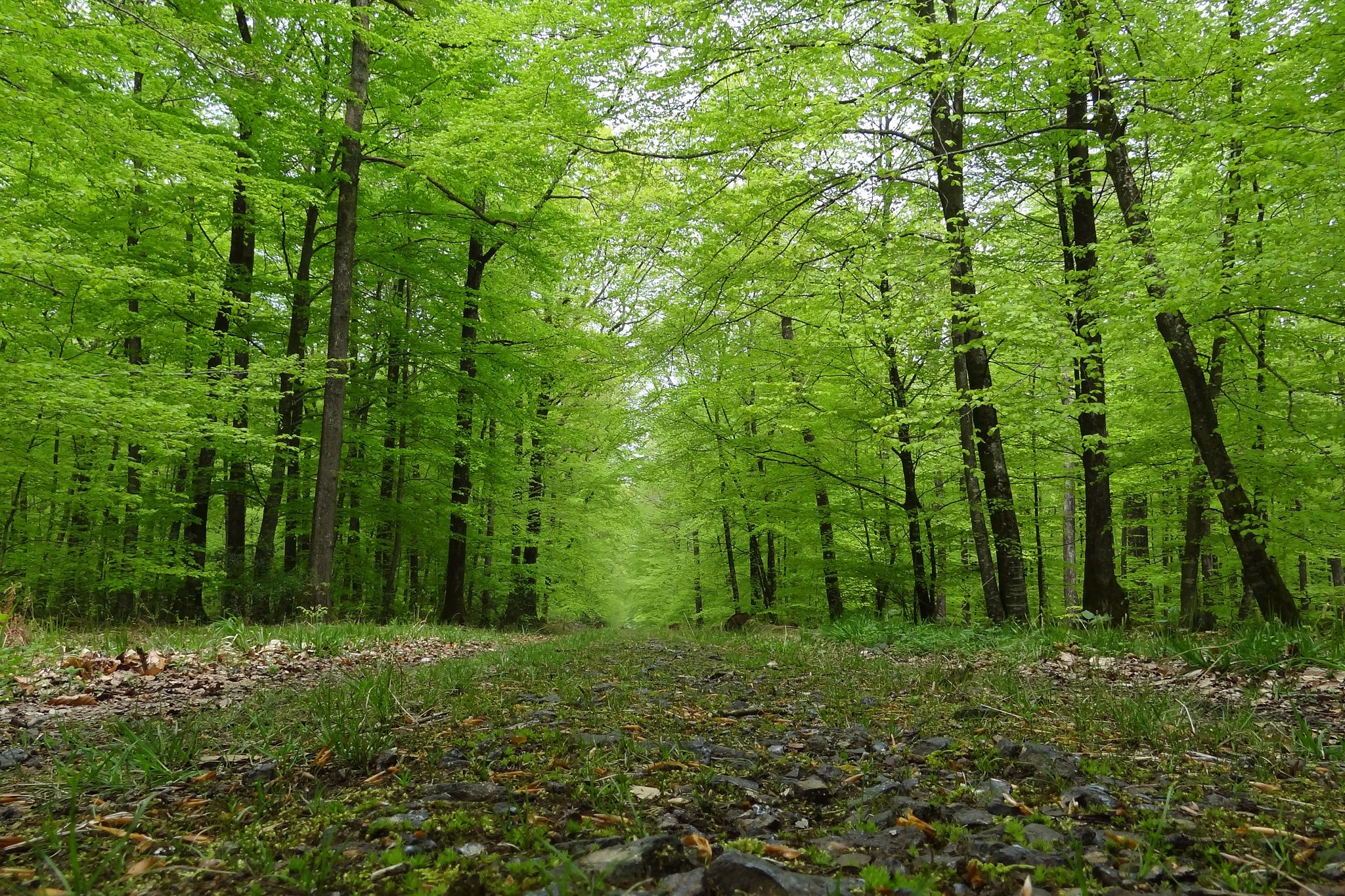 Comment la forêt s'adapte au Réchauffement climatique