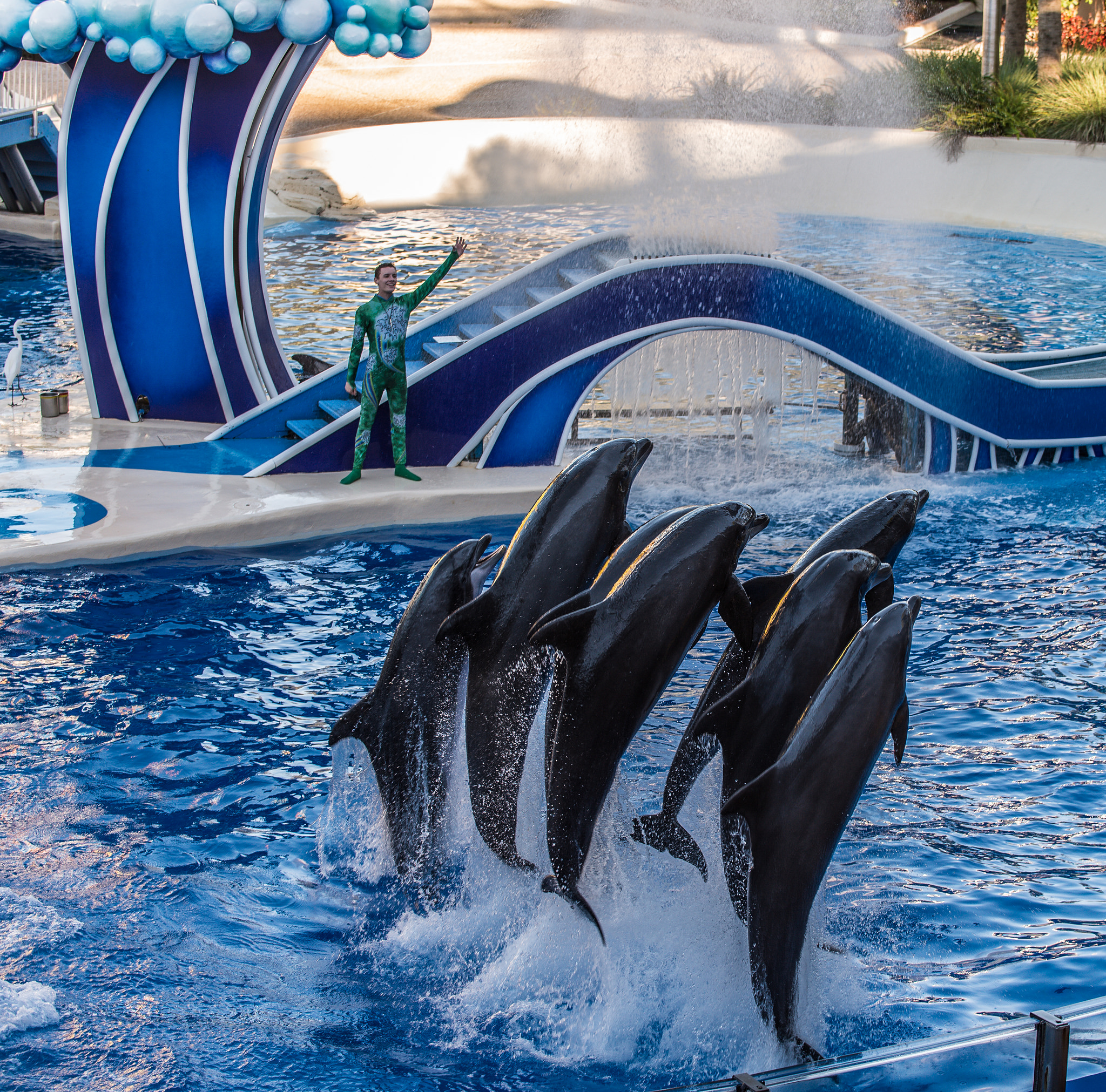 Faut-il fermer les delphinariums ?