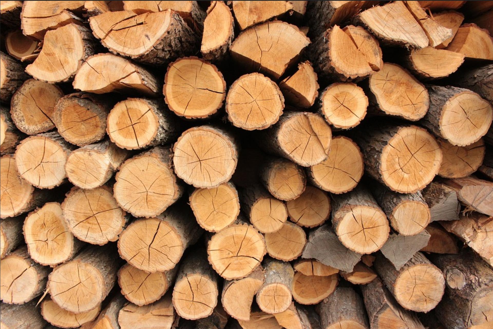 Accord avec l'Etat et l'ONF, programme national : les communes forestières passent à l'action
