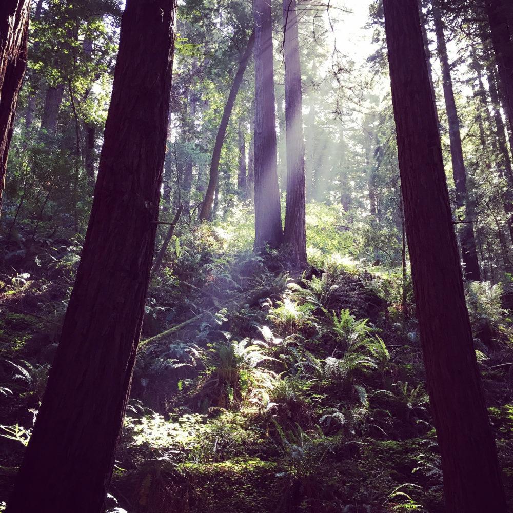 Une nouvelle forêt d'un million d'arbres