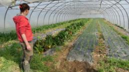 Maraîcher bio du campus agricole du Rheu en Bretagne. Photo : Anne-Flore Hervé, 25 mars 2021